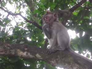 A contemplative character at the Monkey Forest Sanctuary
